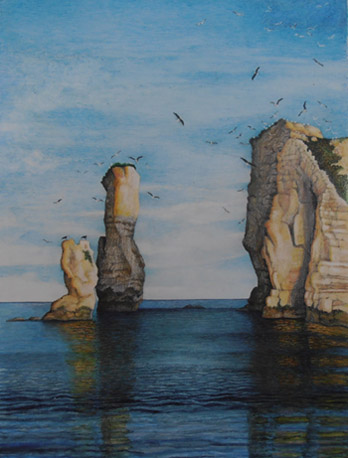 Gulls. Old Harry Rocks