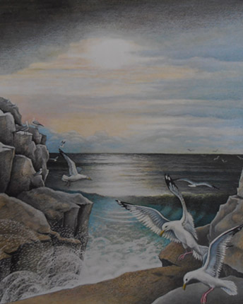 Herring Gulls. Winspit