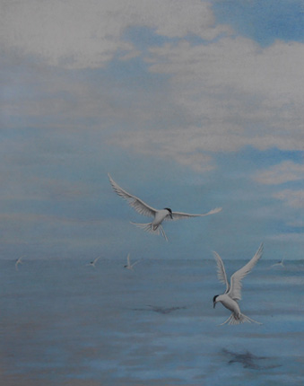 Terns. Sandbanks