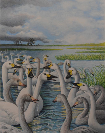 Swan Arrivals
