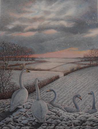 Swan Snows
