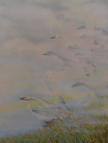 Swan Touchdown Mist